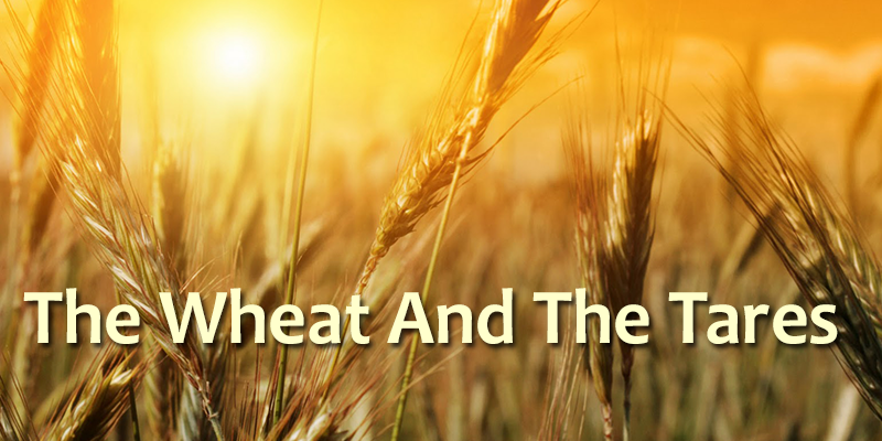 Teaching of wheat and tares